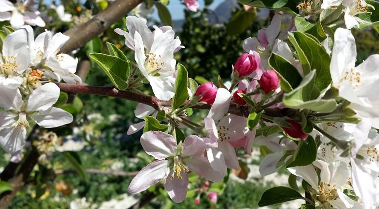Oferta Primavera